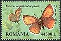 Romania2002 Tomares nogelli dobrogensis.jpg