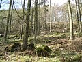 Rowantree Howe, Miterdale Forest - geograph.org.uk - 746600.jpg