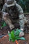 Royal Marines feel the heat in the jungle of Belize MOD 45162180.jpg