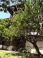 Rozhen Monastery 007.jpg