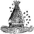 Ruche-entouree-d-abeilles.jpg