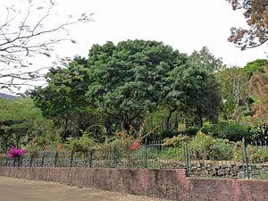 São Lourenço dos Órgãos, Cape Verde - Grandvaux Barbosa National Botanical Garden