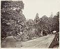 SLNSW 479619 116 Botanic Gardens SH 598 601606.jpg