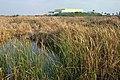 SOUTH PADRE ISLAND, World Birding Center -012 (16476895728).jpg