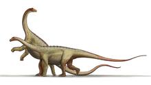 Saltasaurus dinosaur.png
