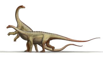 Lithostrotia - Life restorations of a pair of Saltasaurus