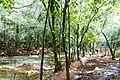 Samaná Province, Dominican Republic - panoramio (115).jpg