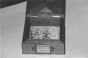 Edith Humphrey - Sample of crystals prepared by Edith Humphrey around 1900