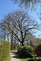 Schleswig-Holstein, Tornesch, Naturdenkmal 12-09 NIK 2240.JPG