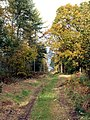 Scrat Haigh Wood Track looking to Jebb Lane. - geograph.org.uk - 599324.jpg