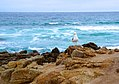 Seagull on the shore by the sea.jpg