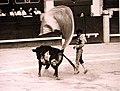 Serpentina-Joselito, Leganés, 30 julio 1998.jpg