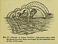 Sex (electronic resource) (1914) (14754346926).jpg