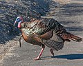 Shake A Tail Feather (16797089138).jpg
