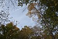 Sharon Woods-Oaks and Beech to the Sky 1.jpg
