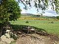 Sheep pasture, gorse and hills - geograph.org.uk - 433361.jpg
