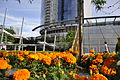 Sheraton Vancouver Wall Center flowers 02.jpg