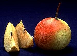 a picture of a shipova fruit