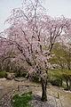 Shojiji Kyoto Japan11s3s4592.jpg