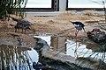 Shorebirds in the aviary at Monterey Bay Aquarium.jpg