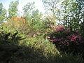Shuni (Jabotinsky Park) in Binyamina 05.JPG