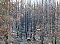 Skogsbranden i Västmanland HE 2014c.jpg