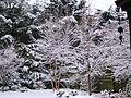 Snowing again - Saturday 14 December 2013 - panoramio.jpg
