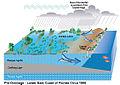South Florida Pre-drainage.jpg