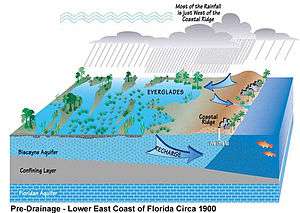 Color digital illustration of the historic water drainage in South Florida, showing underground layers: a full Biscayne aquifer on top, a middle confining layer of rock, and the Floridan aquifer at the bottom; arrows indicate the Biscayne aquifer is recharged by the Everglades and is bordered by the Atlantic Ocean underground. Text indicates the Everglades are fed by rainwater that falls to the west of the Atlantic Coastal Ridge