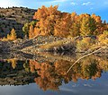 Spectacular fall colours on Hwy 287 near Madison, Montana (11226600583).jpg