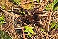 Spider (15372571584).jpg
