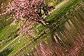 Spring in London (6970535128).jpg