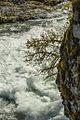 Sproat river (8642339189).jpg