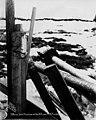 Stakes in snow, possibly mining claim, Nome, Alaska, April 24, 1906 (AL+CA 7529).jpg
