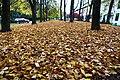 Stanley Park - 10398480263.jpg