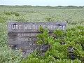 Starr-010520-0014-Scaevola taccada-habit and refuge sign-Near beach-Kure Atoll (24450358081).jpg