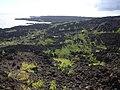Starr-040331-0103-Nicotiana glauca-habit-Kanaio-Maui (24072308394).jpg