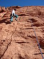 Starr-071222-0267-Agave utahensis-habitat with Kim climbing-Cow Lick Crag Calico Basin-Nevada (31478198726).jpg