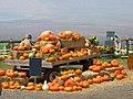 Starr-111004-0561-Cucurbita pepo-habit with pumpkin display-Kula Country Farms-Maui (24750673669).jpg
