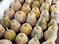 Starr-131002-2359-Cucurbita moschata-harvested fruit-Hawea Pl Olinda-Maui (25109000012).jpg