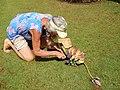 Starr-140925-1944-Musa balbisiana-with Angela cutting to show seeds-Pali o Waipio Huelo-Maui (24615851454).jpg