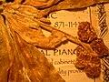 Starr 050427-0890 Tournefortia argentea.jpg
