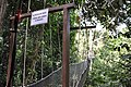 Start of the canopy walk (11967275884).jpg