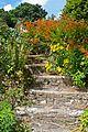 Steps at Trengilly Wartha (4872713100).jpg