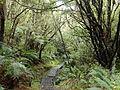 Stewart Island Fern Gully Track.jpg