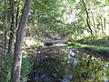 Stream in Forest 44.JPG