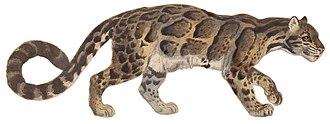 Panthera - Image: Studienblatt Felis macroscelis Nebelparder (white background)