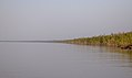 Sundarbans in the afternoon 2.jpg