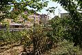 Suresnes - Jardins familiaux (10).JPG