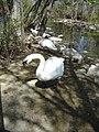 SwansForestryFarm.jpg